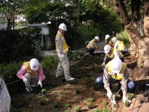 We plant dianthus