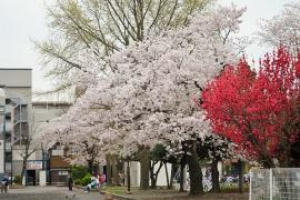 Imagen de parque de Shiota