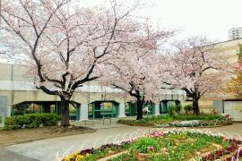Imagen de este Yamamae Sakura Parque