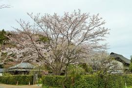 Imagen de la mansión de Yokomizo