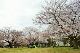 Imagen de parque de Shioiri