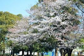 Imagen del parque de Irifune