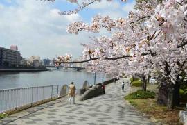 El parque de ciudad de borde de la agua de Tsurumi Río
