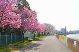 Imagen a lo largo del Río de Tsurumi