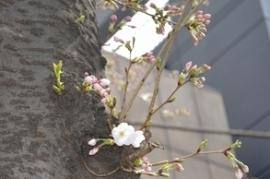 Imagen del parque de camino de estación de Salida Oriental (Tsurumi Station)